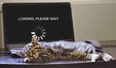 "Kitten sleeping on laptop keyboard; ""loading, please wait"" on screen"